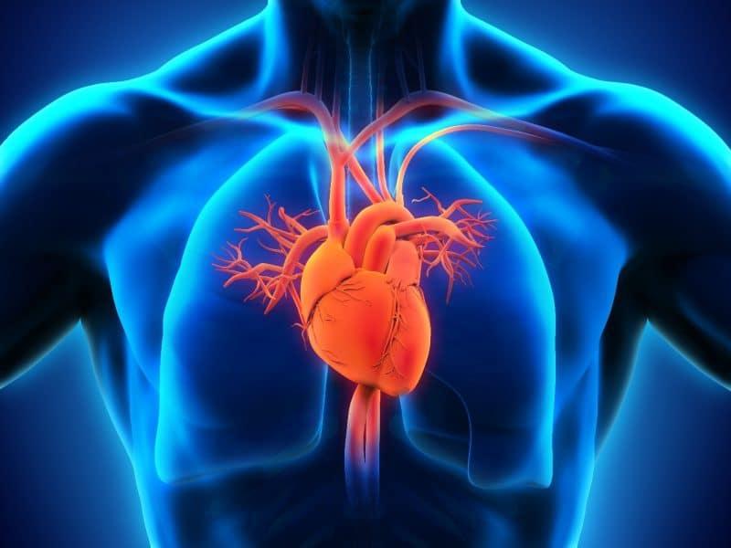ajo negro favorece la salud cardiovascular