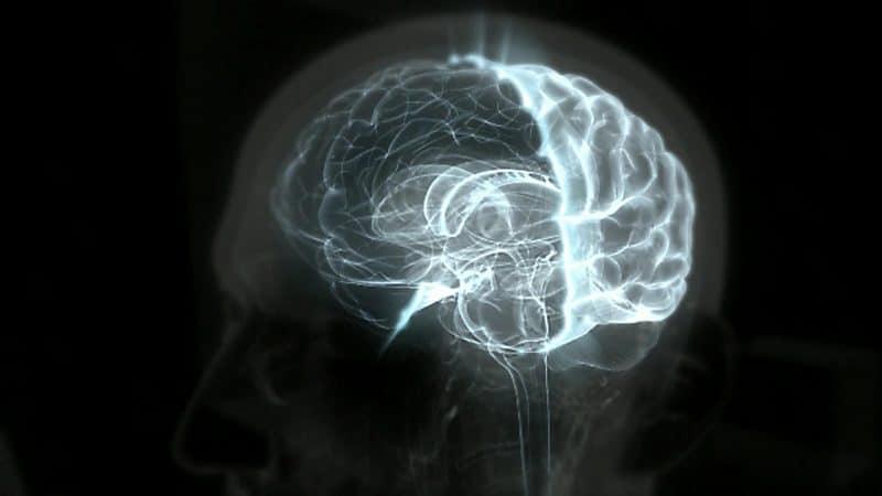 ajo negro reduce los efectos de la senilidad