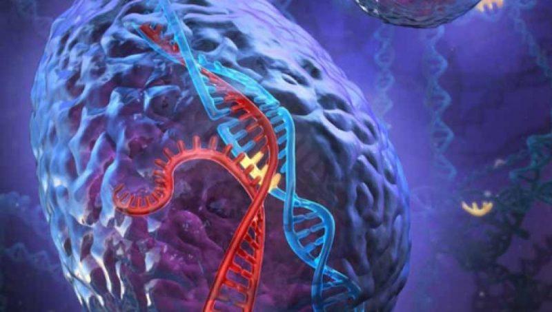 bayas de acai estimulan la función cerebral