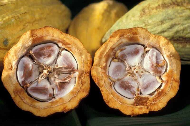 cacao diurético