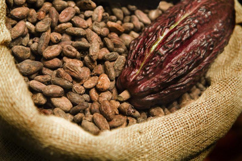 cacao para adelgazar