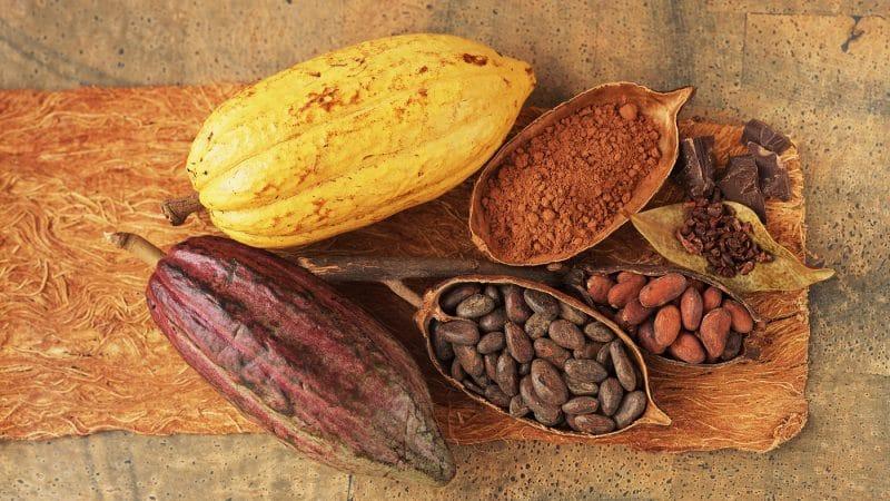 cacao para combatir el cáncer