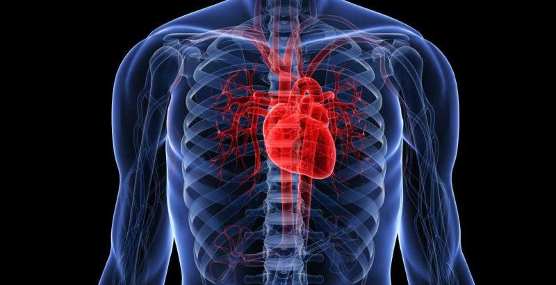 propiedades del acai para el corazón