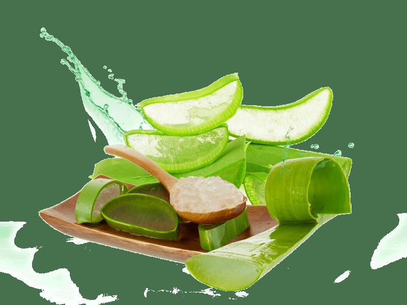 propiedades del aloe vera para la digestión