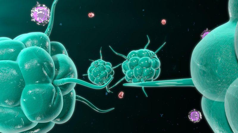 alga espirulina sistema inmunológico