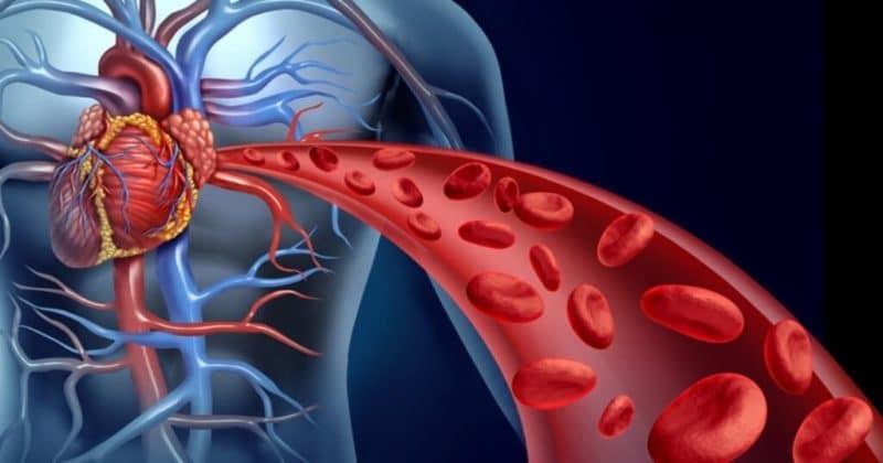 beneficios de la stevia para el sistema circulatorio