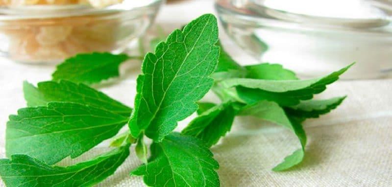 datos curiosos de la stevia
