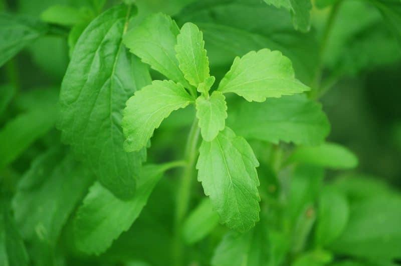 desventajas de la stevia