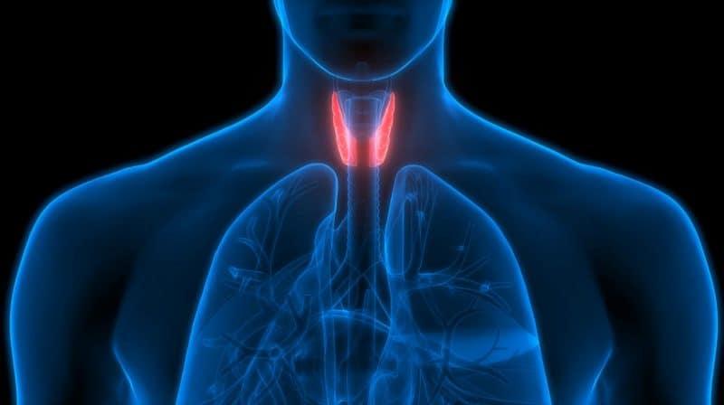 efectos secundarios de comer kale en la tiroides