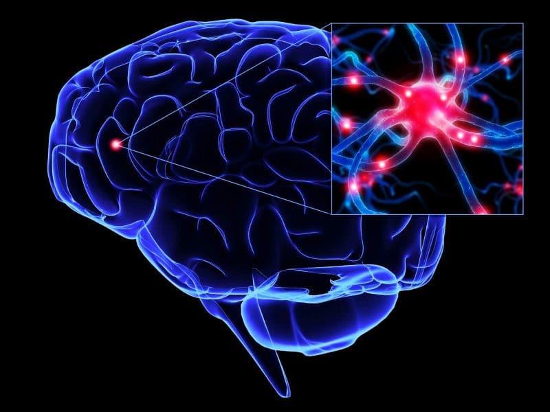 espirulina efecto neuronal