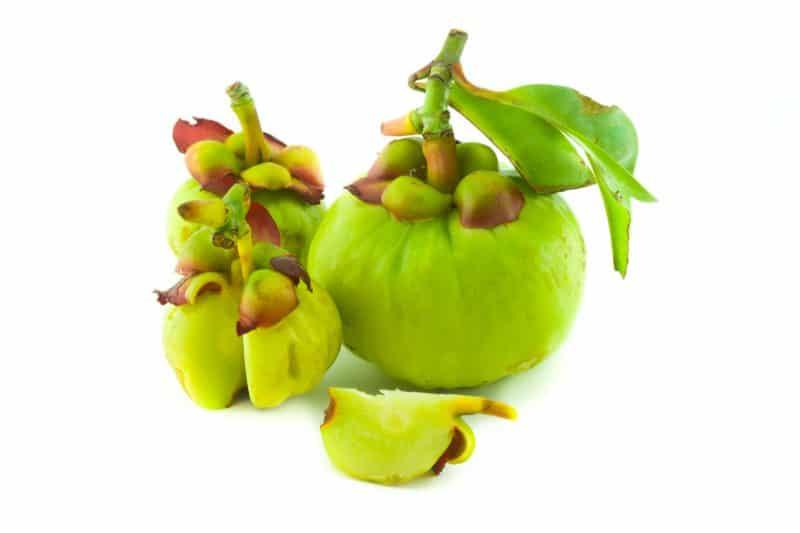 garcinia cambogia antioxidante