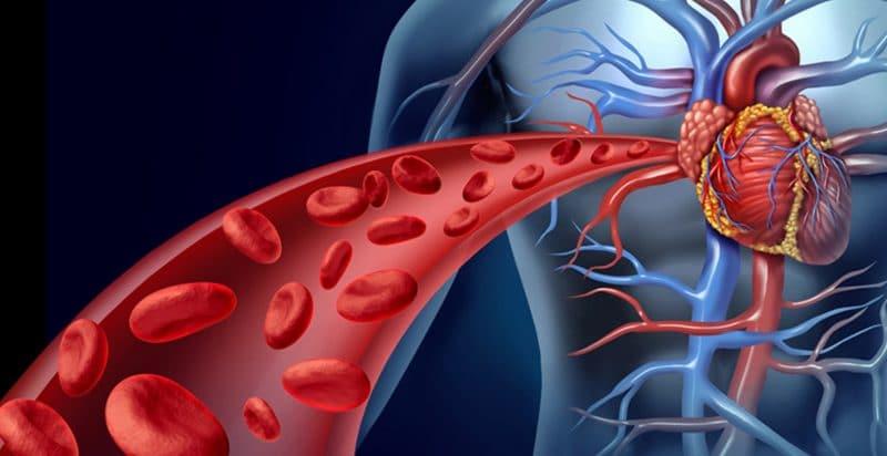 garcinia cambogia para el sistema circulatorio
