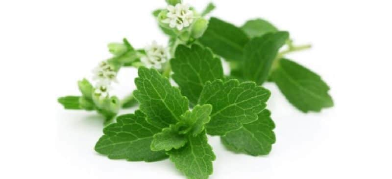 productos elaborados con stevia