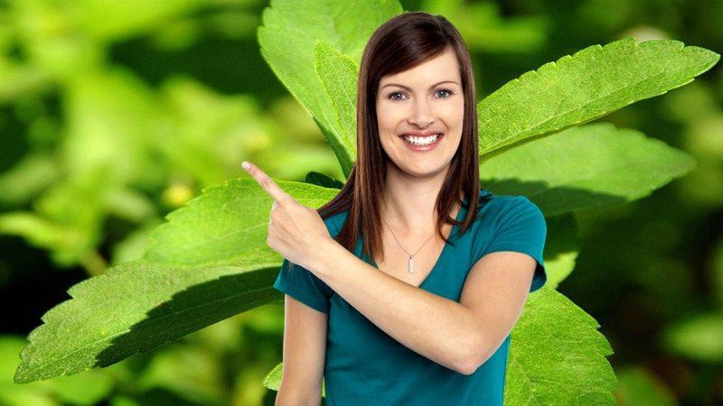 propiedades de las hojas de stevia