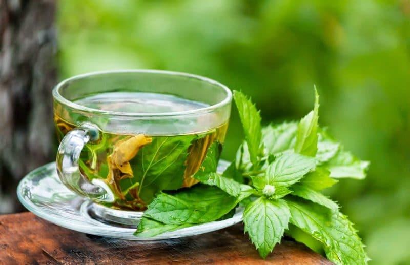 té de stevia para adelgazar