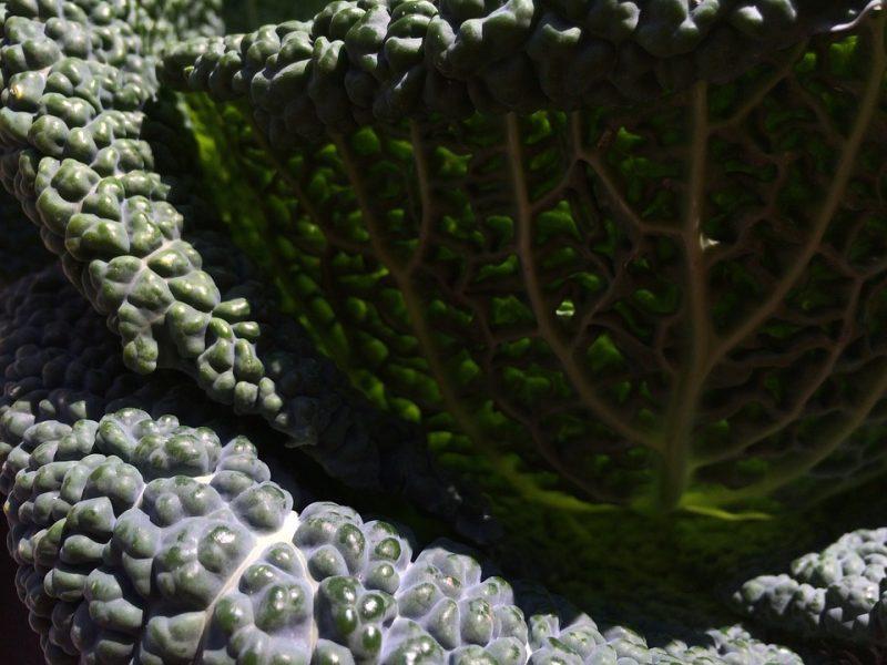tipos de kale kale toscano o dinosaurio